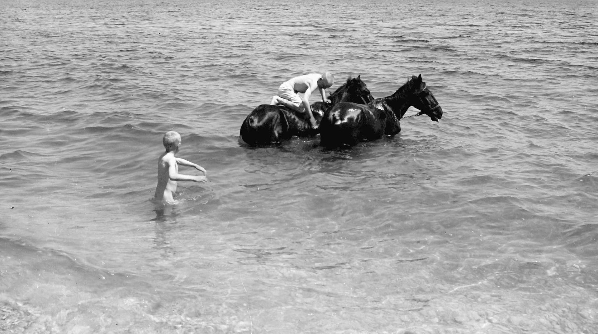 Pferde_im_Meer.jpg