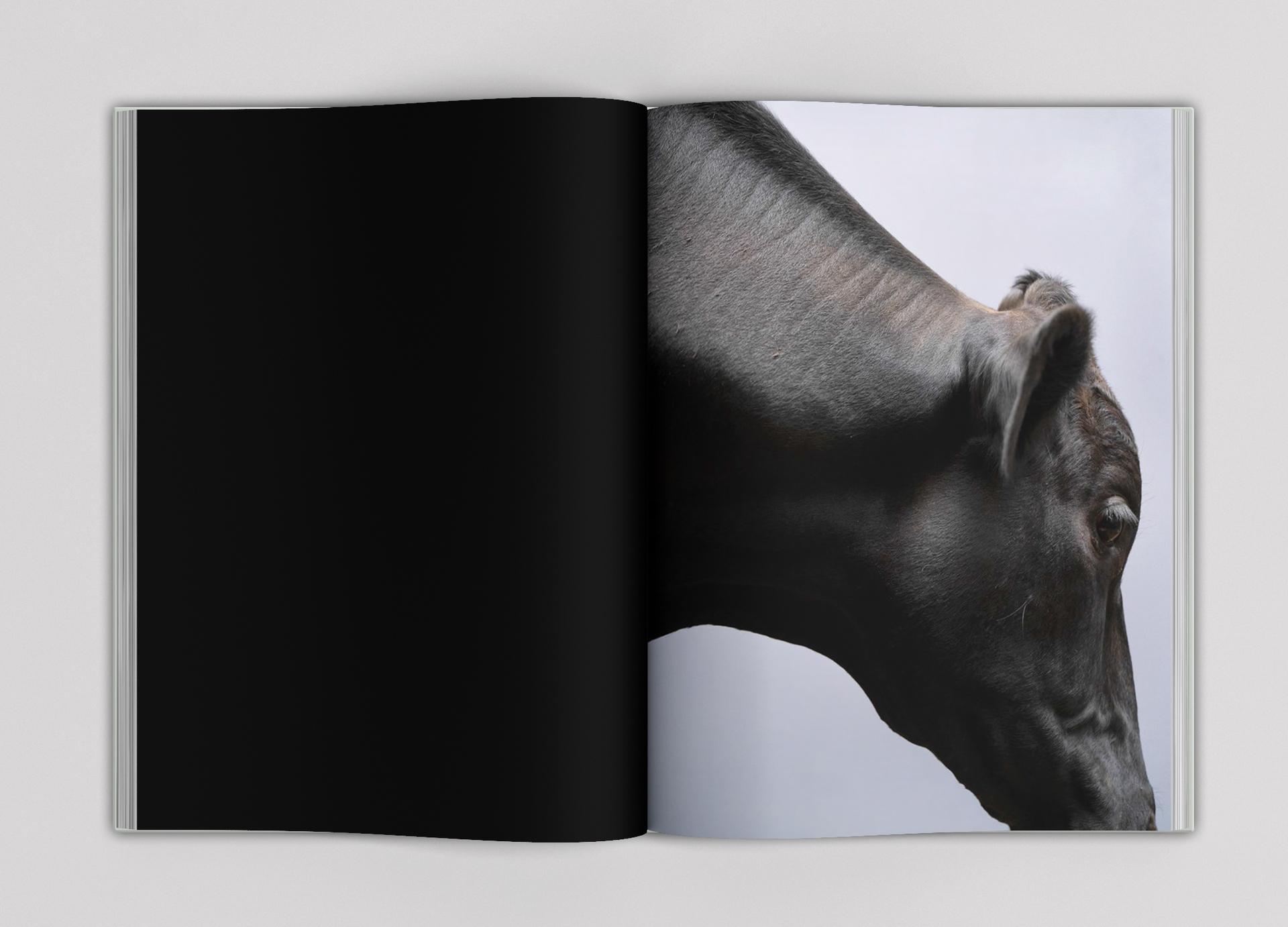 Paul Seawright Beasts of Burden p 6-7.jpg