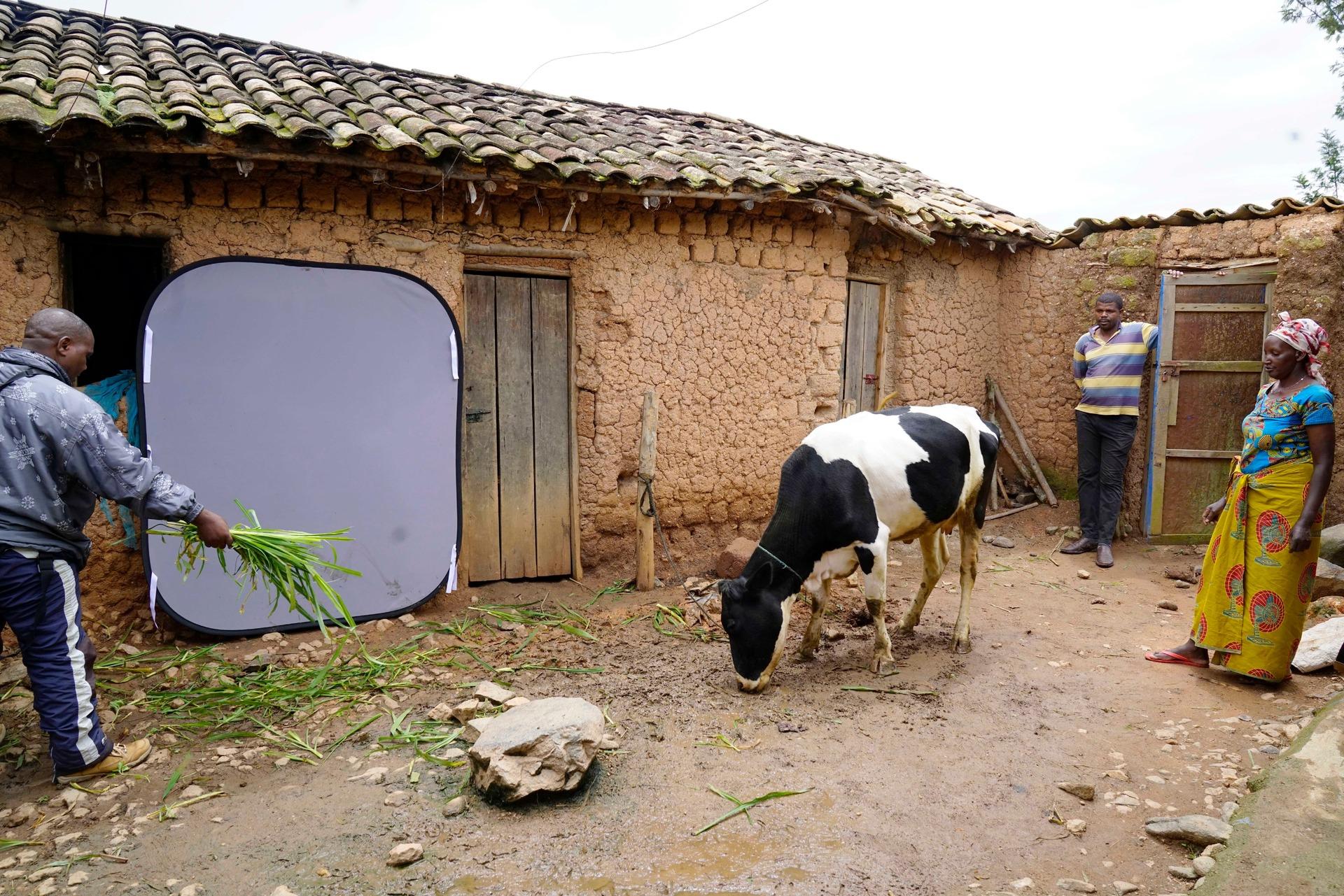 Production still Cows small.jpg