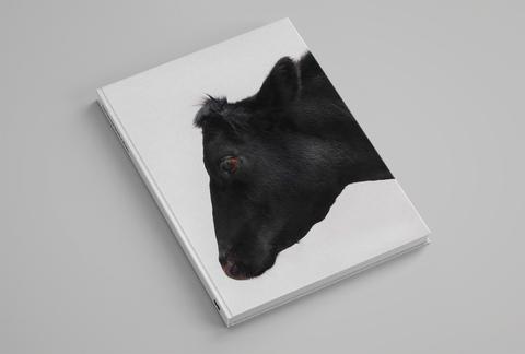 Paul Seawright Beasts of Burden cover a.jpg